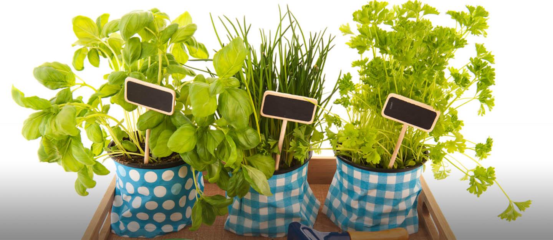 benefits of having a kitchen garden