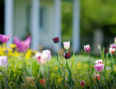 Prepare Your Home For Spring