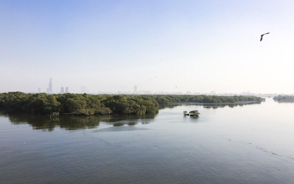 Mangrove forest in Karachi