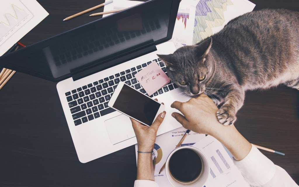 Almost all individuals are working from home