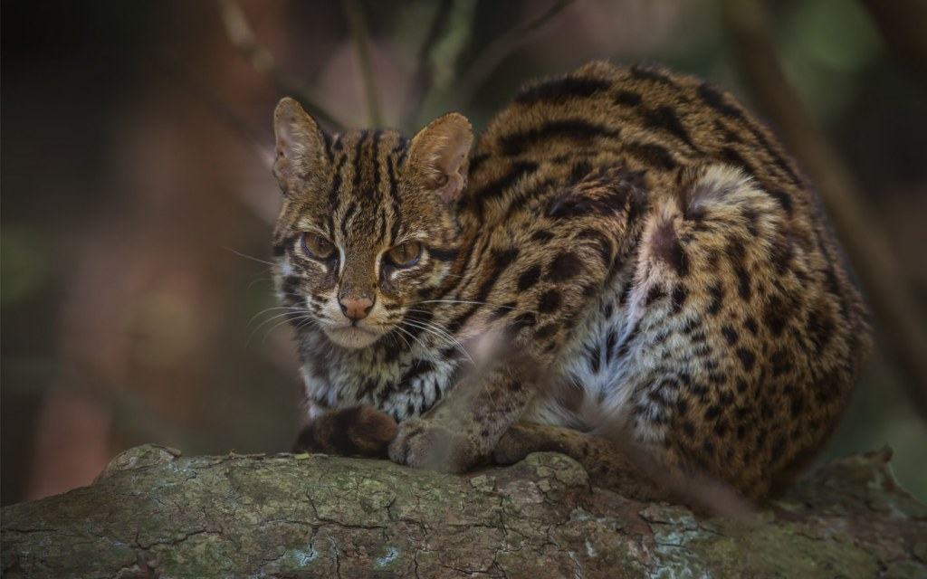 Lehri National Park is home to leopard cats