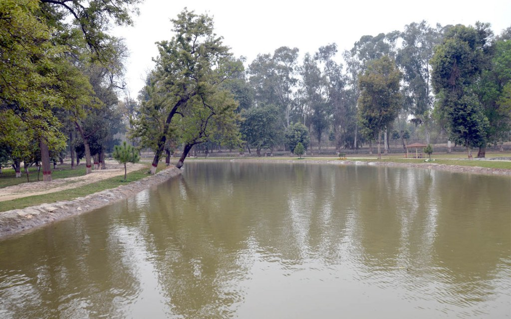The largest forest of Pakistan is in Punjab